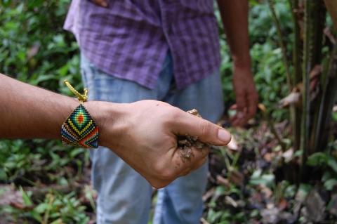 La foresterie analogue comme alternative pour le développement rural et la conservation de l'environnement