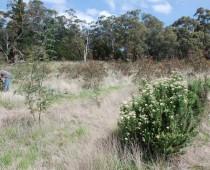 """Plantaciones """"Bio-ricos"""" en Australia"""