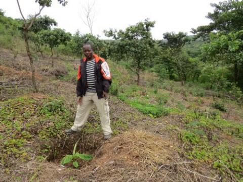 Développement de sites en Amérique latine et en Afrique