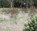 Donnez votre appui au film de restauration des terres du groupe Ballarat Region Treegrower!