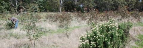 Help support the Ballarat Region Treegrower's land restoration film!