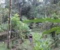 Mejorando la nutrición comunitaria mediante la forestería análoga