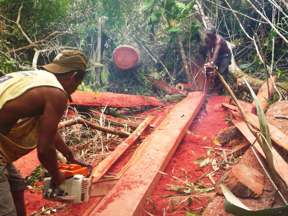 tropical_deforestation