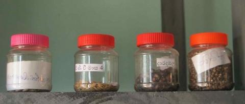 RRI inaugura banco de semillas: una esperanza después de la guerra