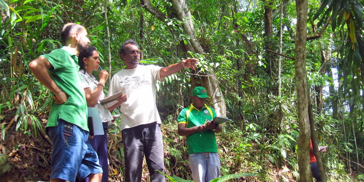Desde la izquierda, Sion Zivetz, Trudy Jurianz, and Ranil Senanayake, durante un taller sobre forestería análoga en el Centro Belipola.