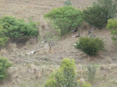 Nouveau documentaire sur la restauration de terres