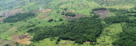 Impacts of deforestation of wetlands in the Cuyamel-Omoa National Park