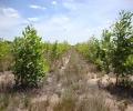Understanding Tropical Soils