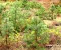 Restaurando zonas templadas con Forestería Análoga