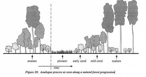 On the re-publication of 'Analogue Forestry – An Introduction'
