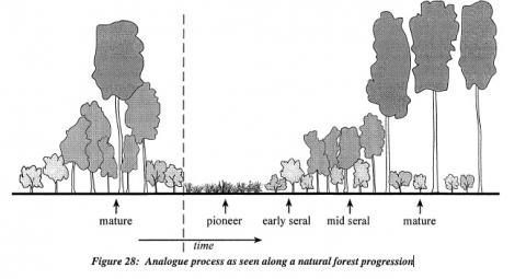 """""""Una Introducción a la Forestería Análoga"""" una nueva publicación"""