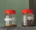 RRI inaugurates community seed bank: hope in the wake of war
