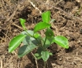 2014 analog forestry demonstration site micro-loans now available!