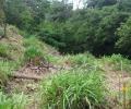 Analog Forestry in cities: Planting in Los Cipreses, San José