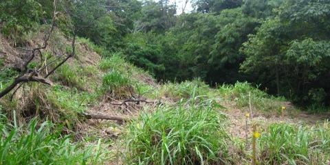 Forestería Análoga Urbana: Siembra en los Cipreses, San José