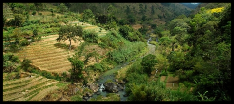 Analog forestry and integrated landscape management in Sri Lanka