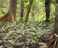 Mensaje del cierre del año del Centro de Capacitación Bosque Análogos