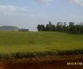 Smallholder tea farmers learn about analog forestry in Ndu, Cameroon