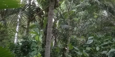 Pambiliño Reserve – a story of balance