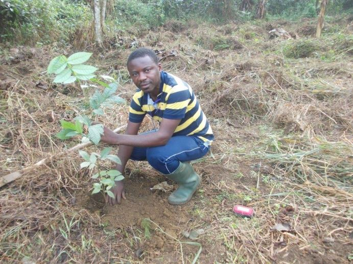 Michael Lyonga, a new analog forestry trainer, planting trees in a new demonstration site. Photo: TroPEG