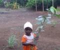 Árboles de Sri Lanka