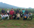 Agroforestry in Mexico: a step towards analog forestry