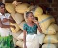 Restaurando la sostenibilidad en la agricultura de Sri Lanka (Ranil Senanayake)