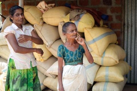 Restoring sustainability to Sri Lankan agriculture (Ranil Senanayake)
