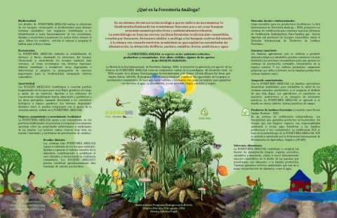 Analog Forestry Contributions (Poster)